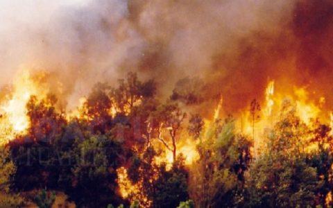 De violents incendies en Algérie ont fait 65 morts en 2 jours.